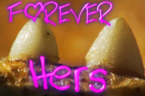 ForeverHersTCard1
