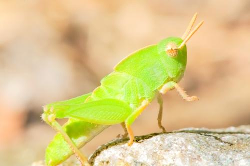 grasshopperhello2